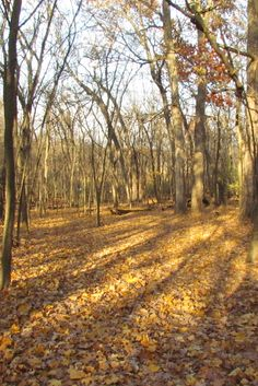 Be sure to experience the beautiful autumn colors of Coral Woods Conservation Area.  This hike from 11/2013 was a leaf-crunching, cool, crisp, colorful hiking adventure!  7400  Somerset, Marengo, IL     Find a map at www.MCCDistrict.org