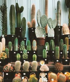 A cactus is a superb means to bring in a all-natural element to your house and workplace. The flowers of several succulents and cactus are clearly, their crowning glory. Cactus can be cute decor ideas for your room. Cacti And Succulents, Planting Succulents, Planting Flowers, Cactus Planters, Cactus Cactus, Desert Cactus, Desert Plants, Outdoor Cactus Garden, Potted Garden