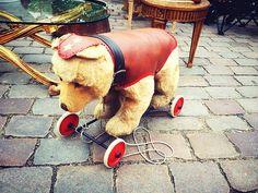 Bär auf Rädern #gesichtet