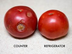 This guy puts the conventional theory to never refrigerate tomatoes because they wont taste as good to the test.