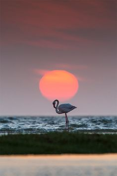 Flamingo in Walvis Bay at sunset by Marco Galotti Photography Beautiful Birds, Animals Beautiful, Land Of The Brave, Sunset Silhouette, Sunrise Photography, Spirit Animal, Funny Photos, Pretty In Pink, Photo Art