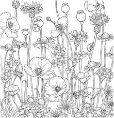 Adult Coloring Book Pages, Coloring Pages To Print, Free Coloring Pages, Printable Coloring, Coloring Sheets, Coloring Books, Digital Drawing, Quilt Boarders, Color Me Beautiful