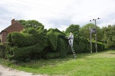 Retired Man Sculpts Giant Hedge Into a 100-Foot-Long Dragon - My Modern Metropolis