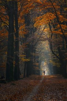 Misty Forest, Magic Forest, Autumn Walks, Bike Photography, Walk In The Woods, Walking In Nature, Walking Paths, Bike Life, Trail