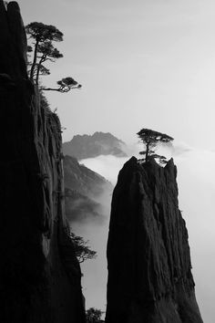 In the cold sky of dawn /Only a single pine-tree / On the peak. (by Gyodai 1732-1793)