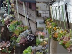 10 Cool Succulent Planter Ideas for Your Home 1