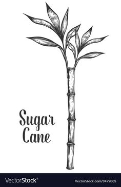 Royalty-Free Vector Images by SunnySquirrel (over Farmers Market Signage, Sugar Cane Plant, Starfish Drawing, Free Vector Images, Vector Free, Drawing Tattoos, Plant Sketches, Baobab Tree, Plant Tattoo