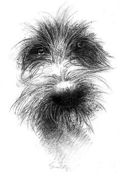 Animal Drawings, Art Drawings, Sketches Of Animals, Dog Sketches, Scruffy Dogs, Dog Paintings, Dog Portraits, Belle Photo, Fine Art Prints