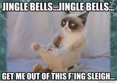 Get Me Out Of This Sleigh christmas quotes funny christmas holiday humor funny christmas quotes christmas memes christmas cats grumpy cat memes christmas image quotes christmas quotes with images christmas images with quotes christmas funny quotes quotes of christmas funny christmas memes christmas meme images