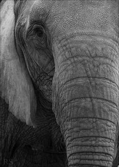 I am an elephant you know
