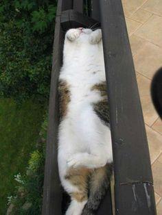 katten-3