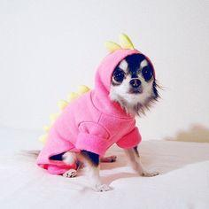 Dogzilla Costume - Poldo will love it!