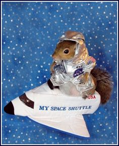 Nothing better than squirrels wearing costumes