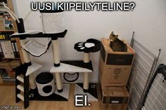 There's No Toy in This Wor is listed (or ranked) 12 on the list Only Cat People Will Understand These Joys of Cat Ownership Funny Cat Memes, Funny Cats, Funny Animals, Animal Memes, Crazy Animals, Animal Humor, Funny Shit, Funny Stuff, Chemistry Cat