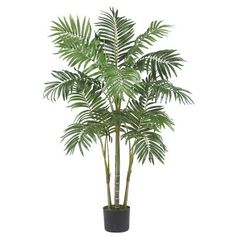 No matter what the weather is outside, this 4' Areca Palm Tree will always keep your thoughts warm and sunny. 14 full fronds spring forth from 4 palm trunks, with the wispy leaves ready to chase away any notion of chill. Trust us, you'll be looking for a hammock within minutes of placing this beauty. Complete with pot and faux soil. 4' Areca #Palm Silk #Tree