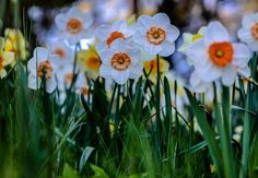 Smiling flowers by Shahul Hameed Liyakath Ali on 500px
