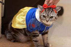 Disney princess cat