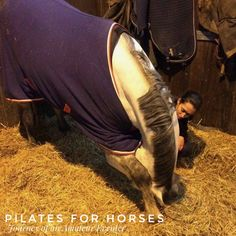 Every day equine stretches, to keep your horse supple and healthy. #physio