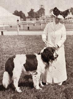 NEWFOUNDLAND AND EDWARDIAN LADY LOVELY PERIOD IMAGE ON DOG PRINT READY MOUNTED