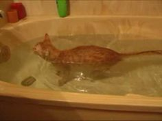 Official Video: Cat Bath Freak Out -Tigger the cat says 'NO!' to bath - YouTube. Do a little dance, bake a little love...