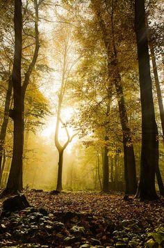 Odenwald Germany by Sebastian  on 500px