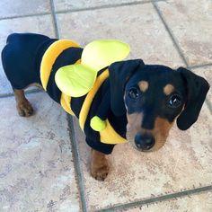 Bee cute...