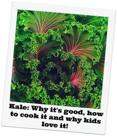 """As a home school project were are creating a Nutritional """"Farm""""acy. Kale is the vegi we're spotlighting today. Take a look and see why kids love Kale and maybe grow your own this summer!"""