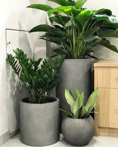 Indoor plants and cement planters are perfection! Indoor plants and cement planters are perfection! House Plants Decor, Balcony Plants, Indoor Plants, Indoor Balcony, Outdoor Planters, Garden Planters, Outdoor Gardens, Balcony Gardening, Cement Planters