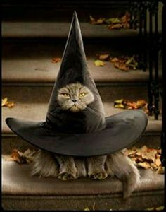 This cat really is in the hat.lol