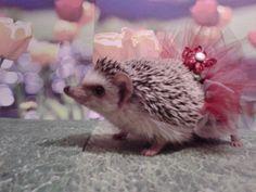 hedgehog in a tutu!