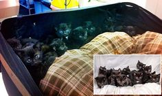 Suitcase containing 15 kittens dumped outside animal hospital
