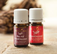 Reach 190 PV on your Essential Reward order this November and receive a free 5ml bottle of Frankincense and 5ml of Sacred Frankincense.  Message me or visit my website for more information or to order: www.ylwebsite.com/paola #youngliving #essentialoils
