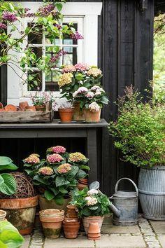 28 Trendy backyard garden shed potting tables Garden Cottage, Garden Pots, Home And Garden, Potted Garden, Spring Garden, Potted Plants, Patio Plants, Potted Flowers, Garden Table