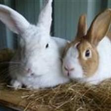 Peanut is a bit of a shy guy at first meeting but will come to have a sniff and say hello. He is looking for a fresh start with his new girlfriend Daisy-Boo, who he likes to cuddle up with in the sunshine.