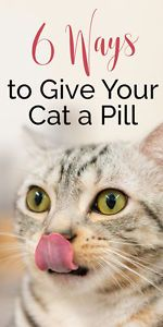 Giving a cat a pill is tricky! Check out these 6 different tricks that will make giving your feline friend a pill a little bit easier.