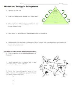 food chains and food webs education pinterest food webs food chains and. Black Bedroom Furniture Sets. Home Design Ideas
