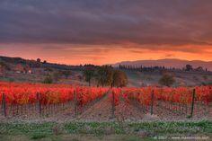 Umbria: Montefalco vineyard scene in late autumn #vinosmaximum #wine