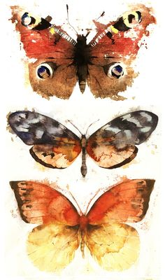Three Butterflies & Moths, Giclée print by Kate Osborne | Artfinder. This series of studies started with drawing from specimen cases in the Booth Museum, our local natural history museum. I was able to spends days peacefully amongst the collection upstairs, drawing and painting in what felt like a bit of a Victorian time warp. https://www.artfinder.com/product/three-butterflies-moths/