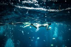 5 Shocking Photos of What It's Like to Swim in Ocean Plastic Pollution | TakePart
