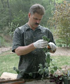 Save Money and Grow More Plants with Tip Cuttings