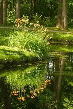 Reflections down by the pond. Landscape Photography, Nature Photography, On Golden Pond, Pond Landscaping, Pond Life, Lily Pond, Water Features In The Garden, Walk In The Woods, Garden Cottage