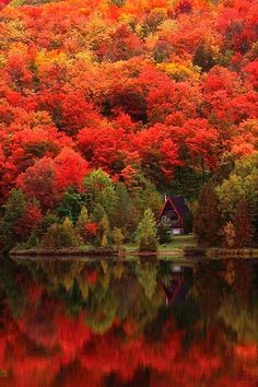 Quebec is beautiful, no matter what the season. It's like going to Europe but without the long plane ride! Le Chateau in Quebec City, Quebec. Beautiful World, Beautiful Places, Trees Beautiful, Wonderful Places, Wonderful Time, Autumn Lake, Autumn Scenery, Autumn Nature, Autumn Forest