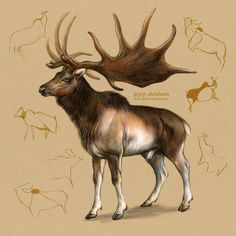 """My favourite prehistoric animal, Megaloceros giganteus or """"Irish elk"""", here depicted with tracings of real Paleolithic cave paintings from southern Fran. Prehistoric Wildlife, Prehistoric World, Prehistoric Creatures, Wildlife Art, Mythical Creatures, Irish Elk, Elk Pictures, Different Forms Of Art, Jurassic Park World"""