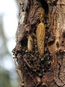 Google Image Result for http://upload.wikimedia.org/wikipedia/commons/thumb/d/d6/Natural_Beehive.jpg/220px-Natural_Beehive.jpg