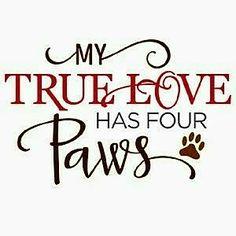 """MY TRUE LOVE HAS FOUR PAWS!"""