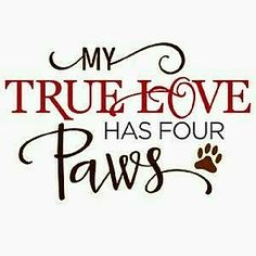 """MY TRUE LOVE HAS FOUR PAWS!"""