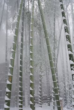 superunknowns: bamboo groove in snow