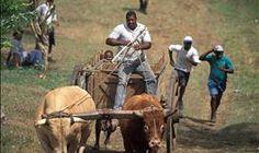 Sol og Badeferie   Sol og Badeferie USA   Sol og Badeferie Italia   REISEbazaar Europe, Horses, Animals, Sun, Italia, Africa, Animales, Animaux, Animal