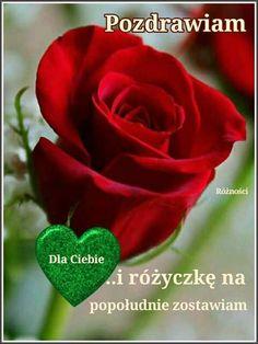 Rose, Flowers, Plants, Image, Ornament, Photo Illustration, Decorating, Floral, Roses