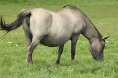 Pregnancy failure in mares is a very real risk; here's how to prevent or handle it.
